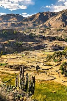 Campi terrazzati all'interno del canyon del colca nella regione di arequipa in perù