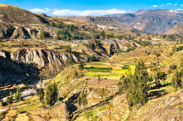 Campi terrazzati all'interno del canyon del colca in perù