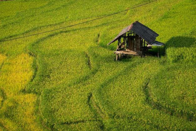 Giacimento a terrazze del riso in mu cang chai, vietnam Foto Premium
