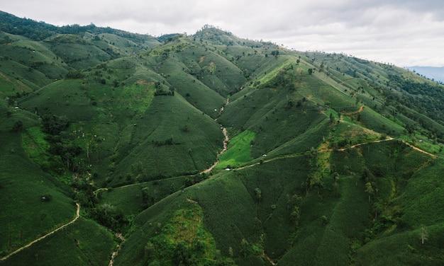 Campo di riso a terrazze vista dall'alto della tailandia del nord