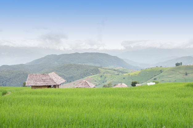 Giacimento a terrazze del riso in pa pong pieng, mae chaem, chiang mai, tailandia.