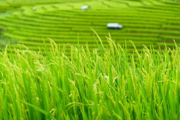 La risaia a terrazze nel villaggio di bong piang chiang mai, thailandia