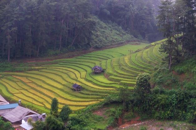 Risaia a terrazze paesaggio del campo di mu cang chai, yenbai, vietnam del nord