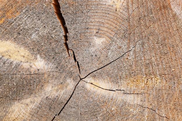 Superficie del ceppo di pino di fondo in legno strutturale con crepe radiali e anelli annuali