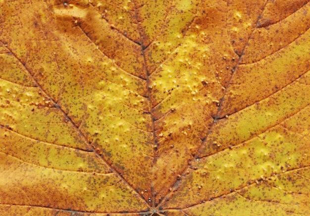 Foglia di autunno del fondo di struttura texture fogliame caduta