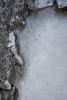 Trama corteccia di betulla e cemento o gesso