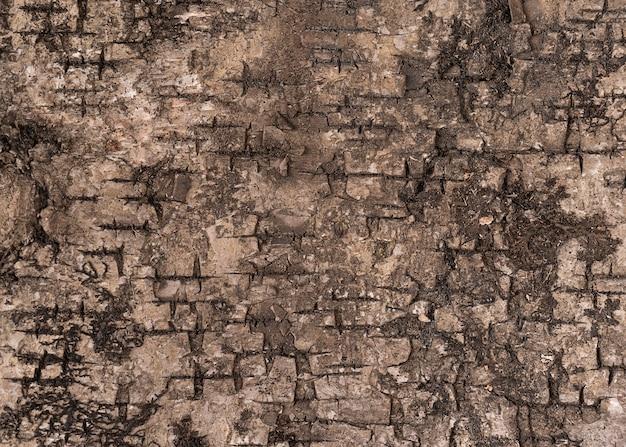 Una trama di corteccia di albero marrone da vicino per il design
