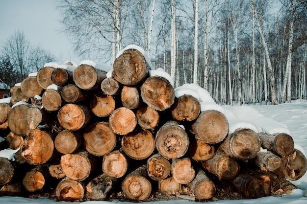 La trama della foresta di conifere è piegata, abbattimento di alberi, legna da ardere.