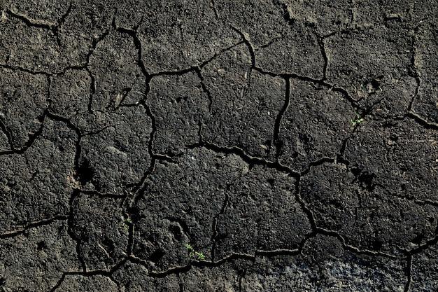 La trama della terra screpolata con piccoli ramoscelli d'erba. chernozem è una terra fertile.
