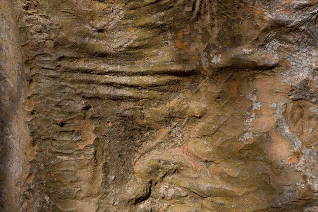 La trama del vecchio legno marrone scuro. corteccia di albero, fondo di legno. primo piano di struttura del bordo largo, banner panoramico.