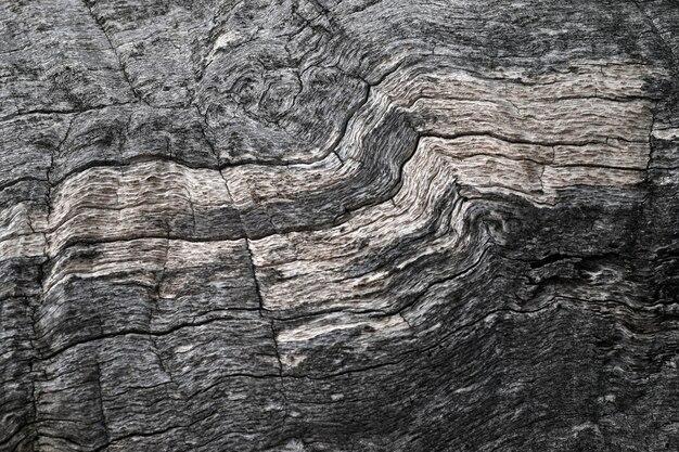 Texture della corteccia secca di un albero