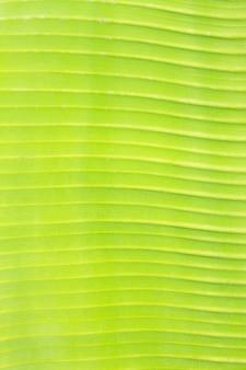 Texture di sfondo macro foglia verde fresca