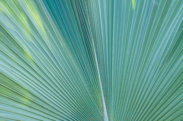 Texture di foglia verde fresca macro close up sfondo