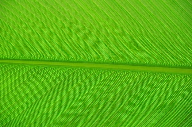 Texture di una foglia verde come sfondo