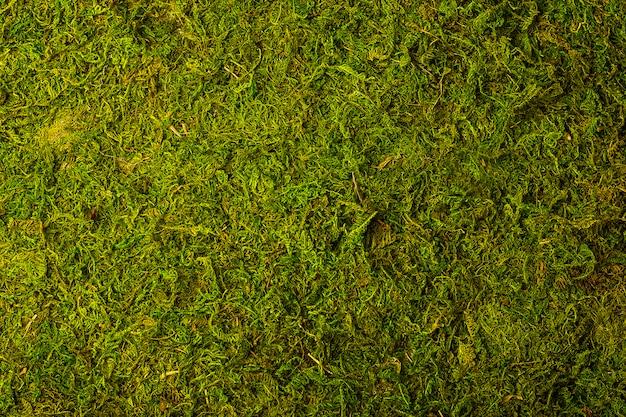 Trama di muschio verde. vista dall'alto