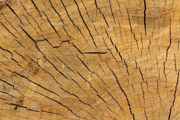 Struttura del tronco di legno di colore chiaro.