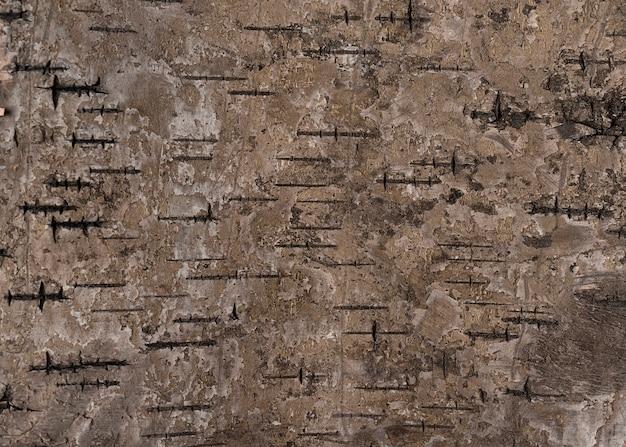 Texture di foto macro di corteccia di legno naturale in alta risoluzione