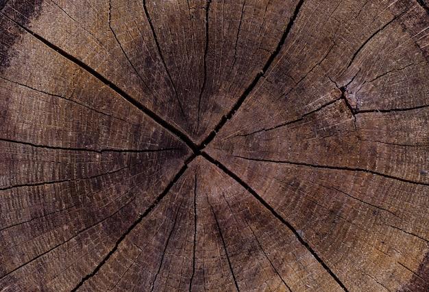 Texture di un vecchio ceppo di albero