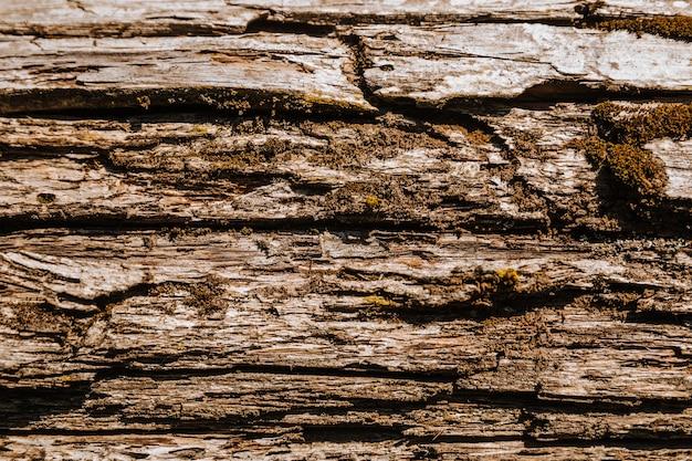 La trama del legno vecchio e la trama della corteccia di albero di muschio