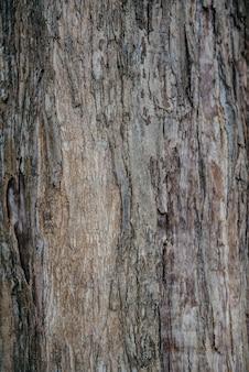 Texture di un vero e proprio vecchio albero tropicale