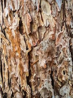Consistenza delle lastre irregolari ruvide della vecchia corteccia d'albero