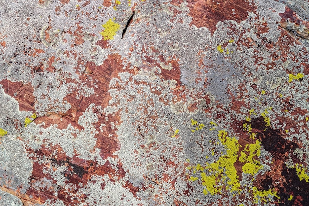 Tessitura della superficie di una pietra ricoperta di licheni foto scattata nei monti altai in autunno