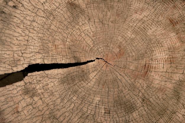 Consistenza del tronco d'albero con crepe