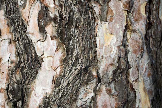Trama dell'albero