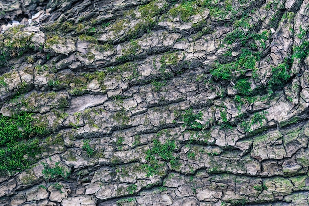 La trama del legno ricoperta di muschio.