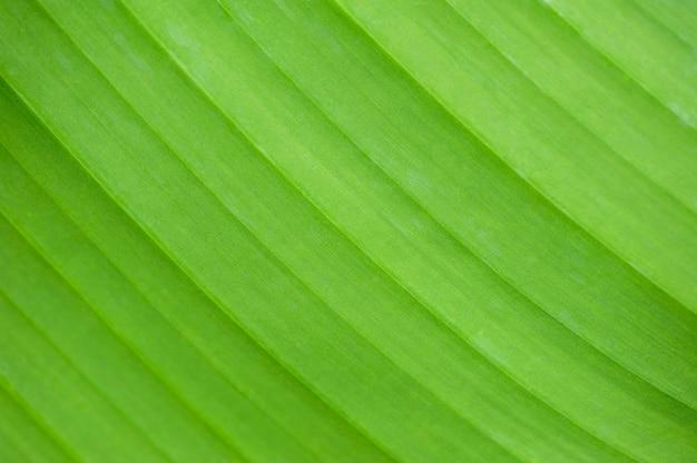 Primo piano di foglie verdi testurizzate
