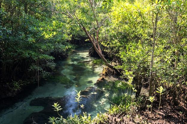 Tha pom khlong song nam a krabi, in thailandia. idilliaca vista tropicale della bellissima foresta di mangrovie