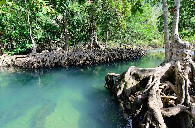 Tha pom klong song nam a krabi a krabi, tailandia