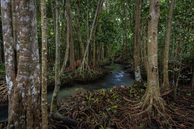 Tha pom mangrove forest, tha pom khlong song nam emerald pool è una piscina invisibile nella foresta di mangrovie a krabi, krabi, tailandia