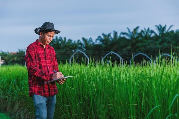 Agricoltori tailandesi che ispezionano le risaie nei campi