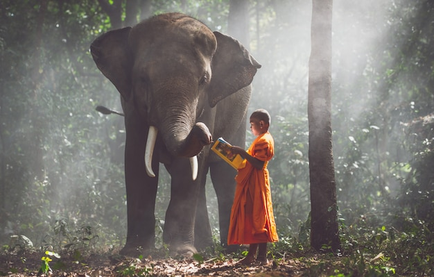 Monaci tailandesi che studiano nella giungla con gli elefanti