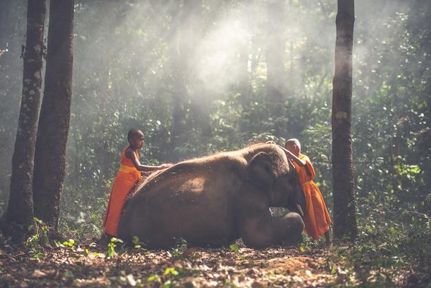 Monaci tailandesi che camminano nella giungla con gli elefanti del bambino