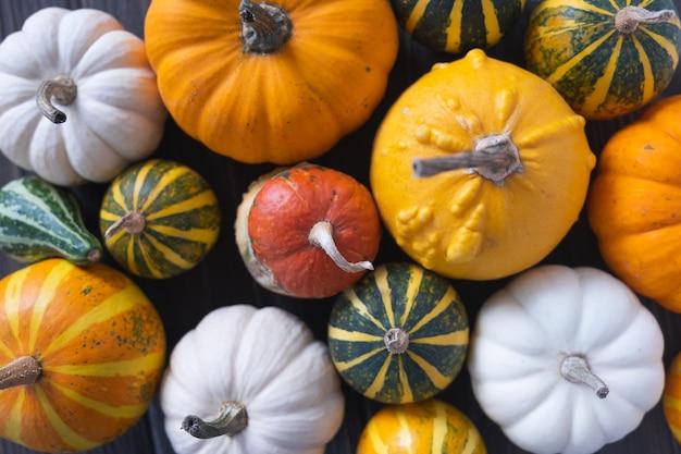 Fondo di ringraziamento con diverse zucche su fondo di legno. halloween o sfondo stagionale. disposizione piatta, vista dall'alto