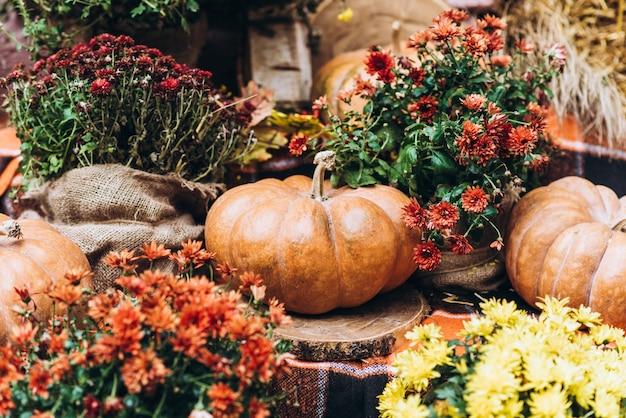 Giorno di ringraziamento still-life: close-up foto di zucche posa su sfondo festivo, autunno sera sole dopo la raccolta, profondità di campo poco profondo