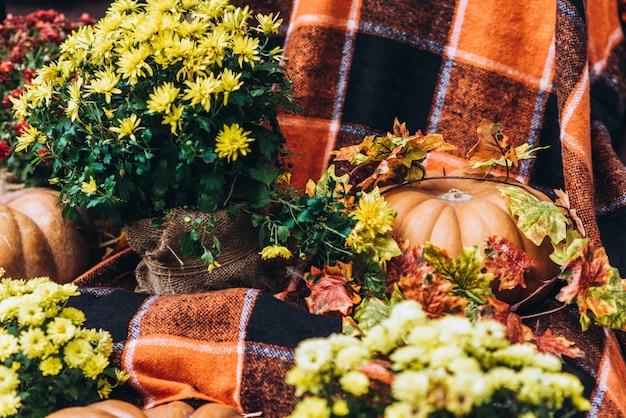 Giorno di ringraziamento ancora vita: zucche stanno posando su sfondo festivo, autunno sera autunnale dopo la raccolta, profondità di campo poco profondo