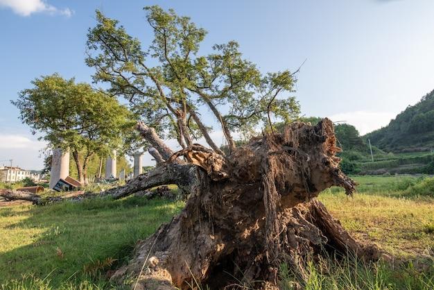 Ci sono molti alberi dall'aspetto strano in natura