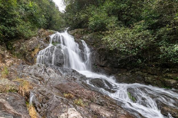 Ci sono piccole cascate nella foresta primordiale. l'acqua è molto limpida