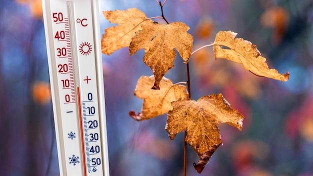 Il termometro su uno sfondo di foglie autunnali mostra 10 gradi di calore