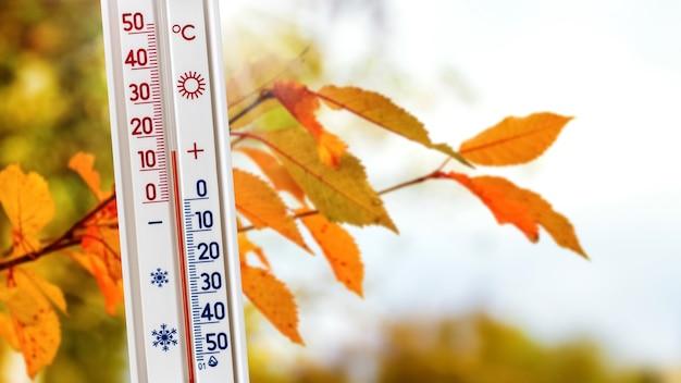 Il termometro vicino al ramo con foglie d'autunno