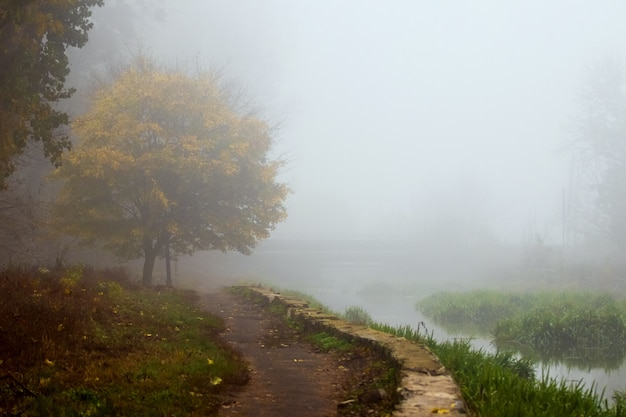 Nebbia fitta nel parco d'autunno, passerella nel parco