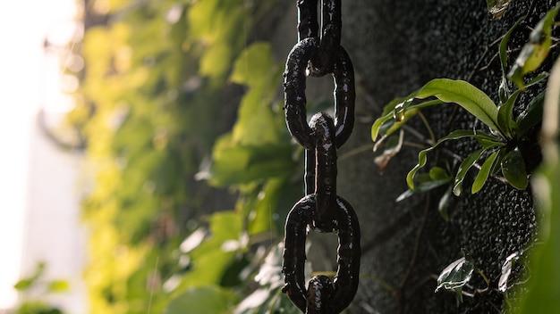 Spessa catena arrugginita appesa a un muro con foglie verdi di piante mentre l'acqua cade