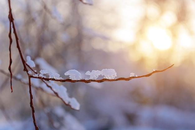 Sottile ramoscello nudo ricoperto di ghiaccio nella morbida luce del sole serale, sfondo sfocato.