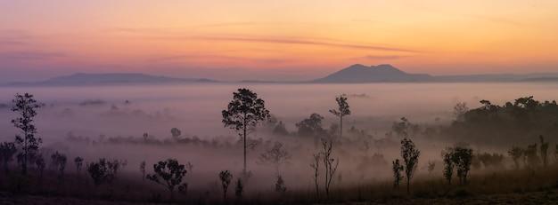 Questa è la foto della montagna pidsanulok thailandia al mattino durante l'alba con nebbia e nebbia montuosa e alberi sihoulette.