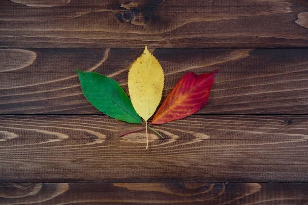 Tre foglie di autunno verdi, gialle, rosse su fondo di legno