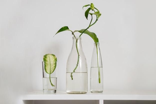 Le tre bottiglie con l'acqua e le piante in crescita in esse sullo scaffale di casa