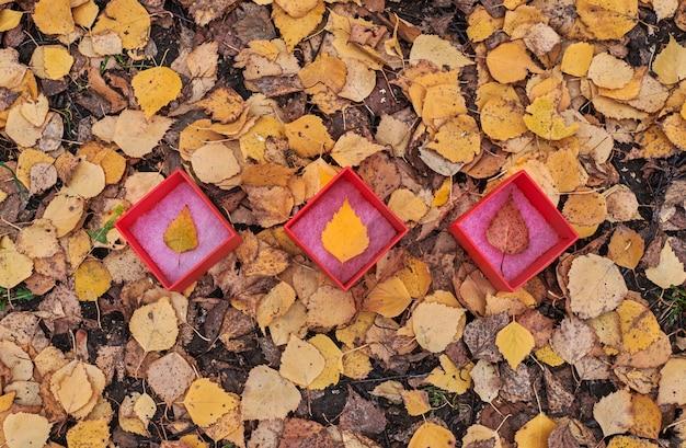 Tre box con foglie d'autunno. le stagioni dell'anno cambiano concetto, copia dello spazio. simbolo di modifica delle previsioni del tempo